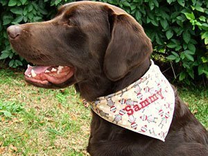 Sammy, Kim's own dog wearing a brand new personalized dog bandana with his own name on it